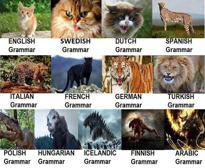 Difficoltà lingua araba